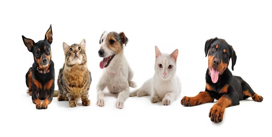 Cachorros em condomínios: Dicas, regras e direitos